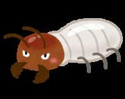 bug_shiroari